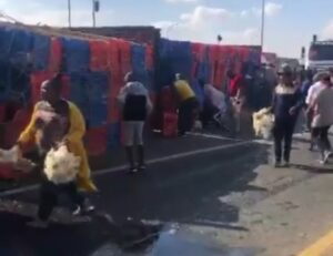 Watch | Scramble for chickens as truck overturns with 9 000 chickens on board
