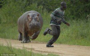 Hippos kill Zimbabwean man trying to cross SA border